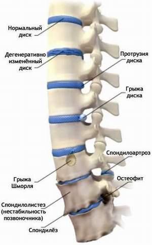 диетологи москвы фото