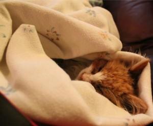 Теплое одеяло для сна